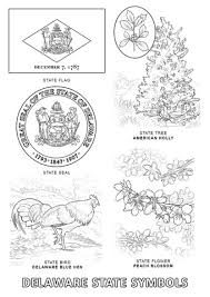 delaware state flower delaware state symbols coloring page free printable coloring pages