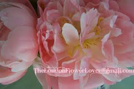 Peony Flowers The Bride Of Wedding Flowers Is Here The Peony Flower Means Happy