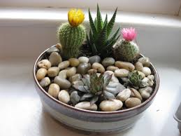 diy rock garden made from thrift shop noodle bowl and plants from