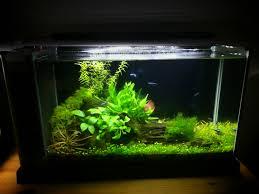my planted nano tanks and 15 000 gallon koi pond i u0027m open to any