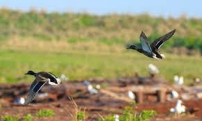 army helping restore wetlands habitat on chesapeake u0027s poplar