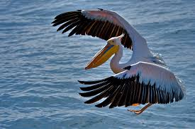 walvis bay travel news namibia