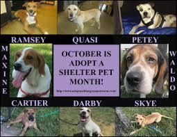 adopt me bluegrass pet rescue adopt me bluegrass pet rescue