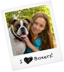 boxer dog utah boxer puppies boxer rescue and adoption near you