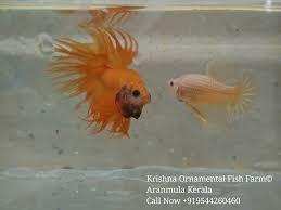 krishna aqua farm kerala ornamental fish farm home