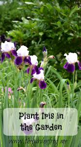Family In The Garden Plant Iris In The Garden Pin Jpg