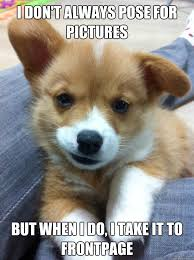 Corgi Puppy Meme - my friends new corgi now i want one aww