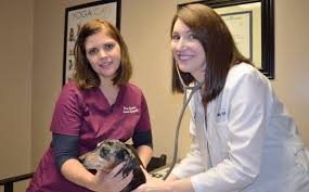 winter garden animal hospital ocoee windermere amazing winter
