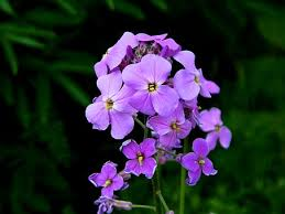 phlox flower phlox flower free pictures on pixabay