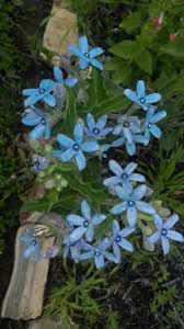 native woodland plants 184 best native plants i want images on pinterest native plants