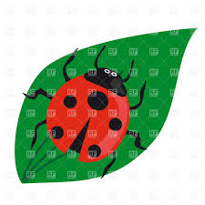 ladybirds on straight green blade vector clipart image 24063