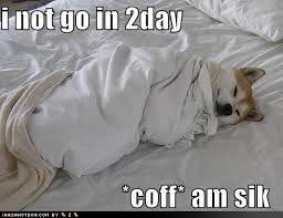 Dog In Bed Meme - 25 most funniest memes about being sick images and pictures