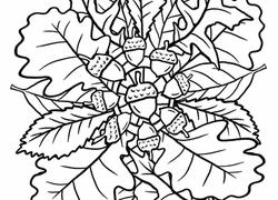 mandalas coloring pages u0026 printables education