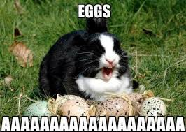 Funny Rabbit Memes - funny rabbit with eggs