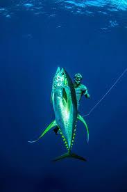 Louisiana snorkeling images 36 best spearfishing images spear fishing scuba jpg