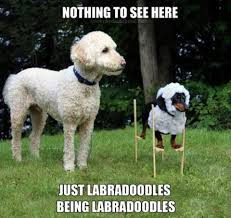 Dog Jokes Meme - dog meme monday dog jokes funny dogs dogs dressing up dog
