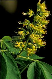 native plant and seed 44 best ky plants images on pinterest native plants kentucky
