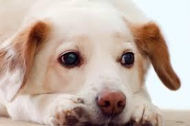 sad dog free stock photo public domain pictures