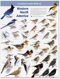 Washington birds images Western wa birds birds pinterest bird westerns and wildlife jpg