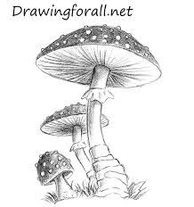 coloring pages charming drawing of mushrooms 6 mushroom coloring