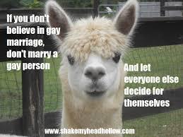 Alpaca Meme - memes shakemyheadhollow