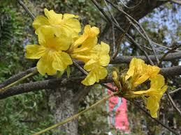 blooms of arizona cus arboretum