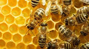 Bee Deterrent For Patio Natural Remedies For Getting Rid Of Bees