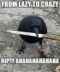 Crow Meme - i imgflip com 22p6d7 jpg