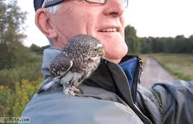 Owl Shoulder - baby owl on a s shoulder best gifs updated daily