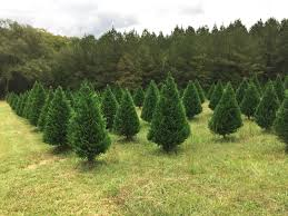 merry christmas tree farm