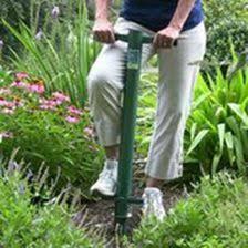planting bulbs caladium with video