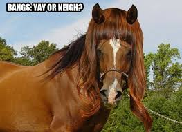 hairstyles for horses horses in lady hair horse nation
