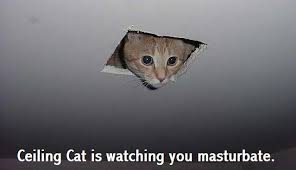 Meme Kitty - ceiling cat know your meme