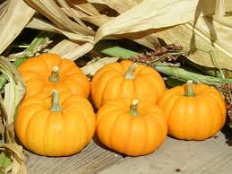 small pumpkins be pumpkin seeds farmer seeds