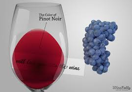 wine facts kinds of wine amazing pinot noir wine facts wine folly