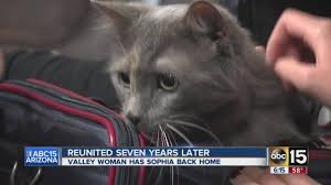 cat reunited with its owners seven years later youtube