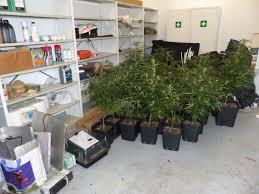 chambre de culture cannabis fait maison provins il transforme la maison de sa grand mère en culture de
