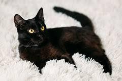 Kitten Bed Little Black Kitten Bed Stock Photos Royalty Free Images