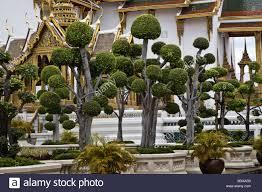 thailand bangkok grand palace ornamental trees on the palace