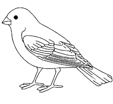 canary clipart black white pencil color canary