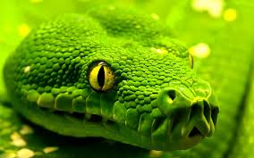snake wallpaper snakes animals 74 wallpapers u2013 hd wallpapers