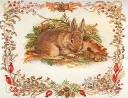 cards no 13715 s rabbit national wildlife