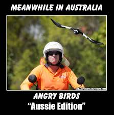 Aussie Memes - meanwhile down under in australia meanwhile pinterest