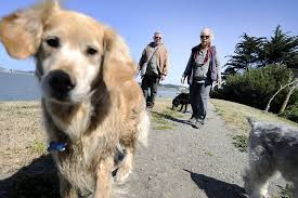 dog friendly parks throw pet owners a bone sfgate