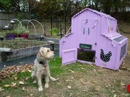 Chickens Backyard Backyard Chickens Under Assault Earthineer