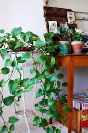 Indoor Plants Low Light by 235 Best House Plants Images On Pinterest Gardening Plants And Pots