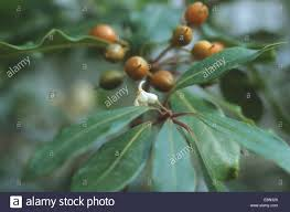what plants are native to australia australian native plants stock photos u0026 australian native plants