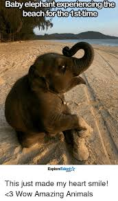 Elephant Meme - baby elephant experiencing the beach for the 1st time talent explore