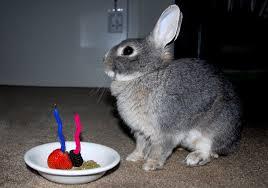 rabbit birthday birthday rabbitmatch org