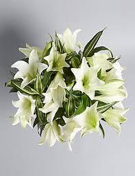 lilies flowers lilies white lilies flowers bouquets plants m s